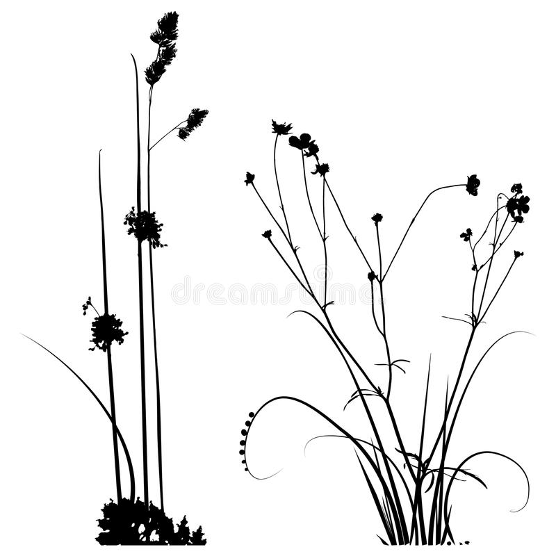 Raccolta in bianco e nero delle siluette delle piante per i progettisti illustrazione di stock