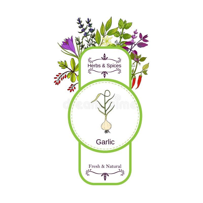 Raccolta d'annata dell'etichetta delle spezie e delle erbe aglio illustrazione vettoriale