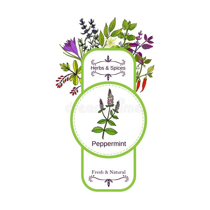 Raccolta d'annata dell'etichetta delle spezie e delle erbe peppermint illustrazione vettoriale