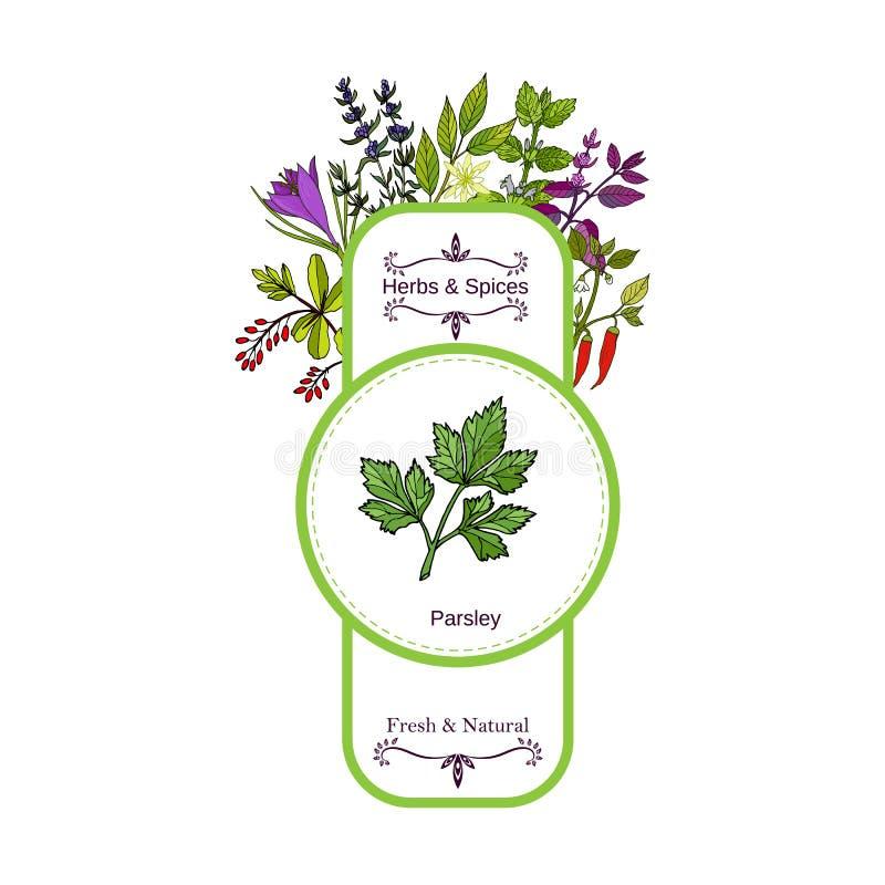 Raccolta d'annata dell'etichetta delle spezie e delle erbe Prezzemolo royalty illustrazione gratis