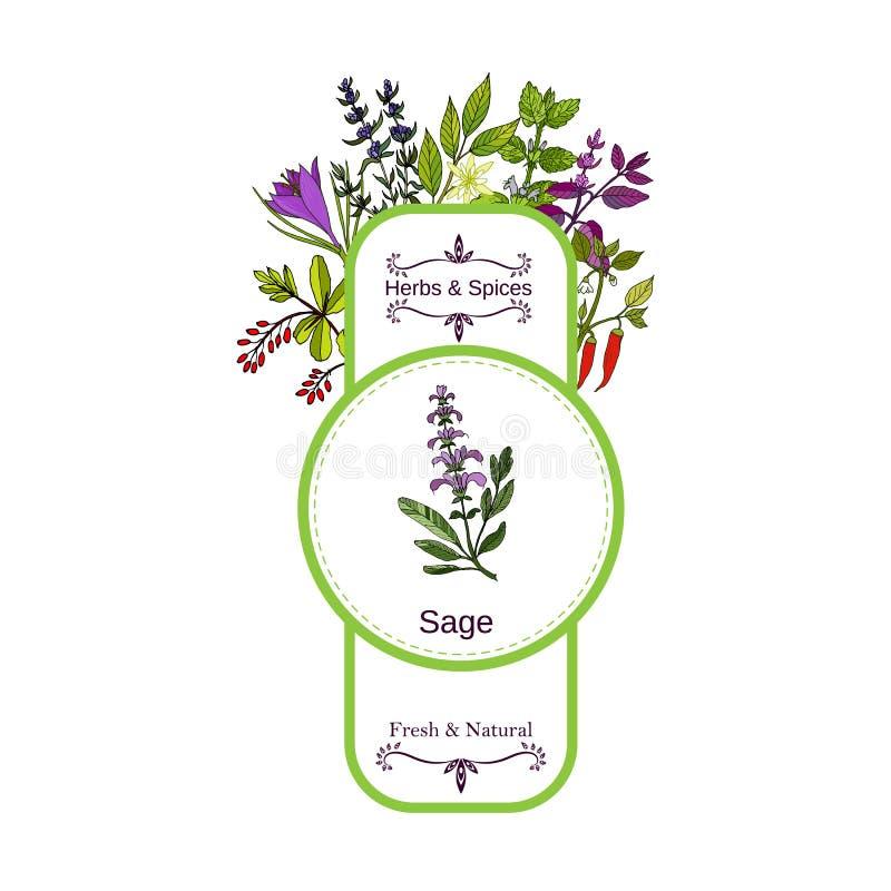 Raccolta d'annata dell'etichetta delle spezie e delle erbe salvia royalty illustrazione gratis