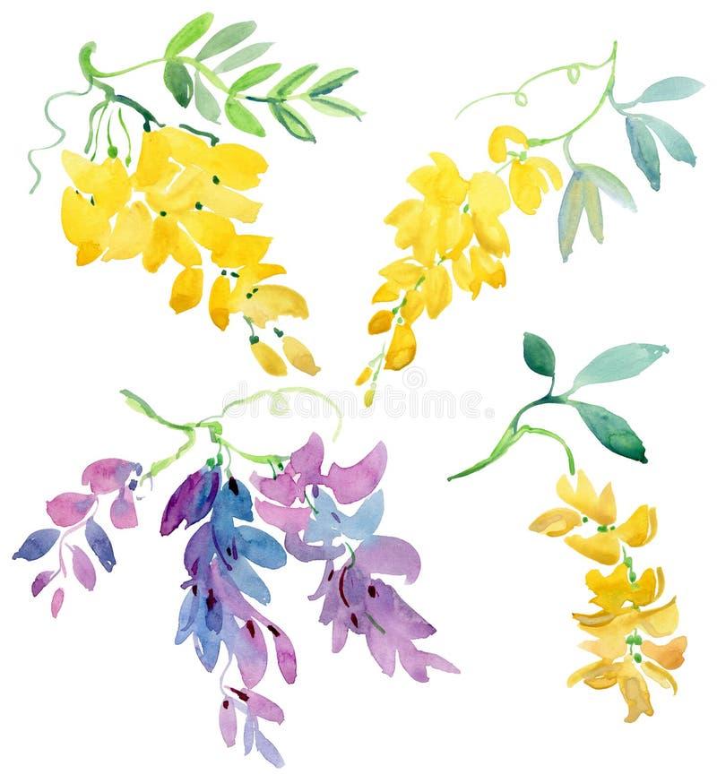Raccolta degli elementi floreali dipinti dell'acquerello Fiori di glicine con l'apertura del fondo verde royalty illustrazione gratis