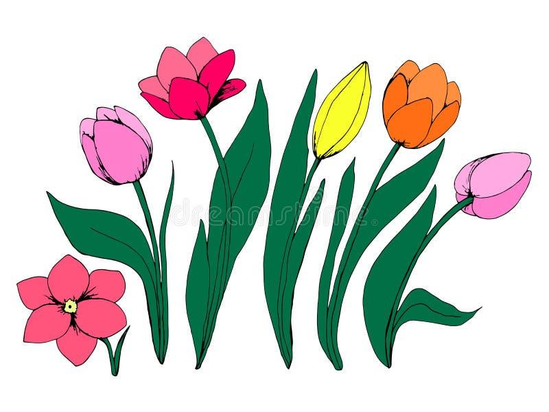Raccolta dei fiori del tulipano illustrazione di stock