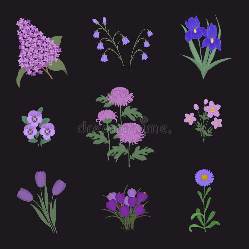 Raccolta dei fiori porpora su un fondo nero illustrazione vettoriale