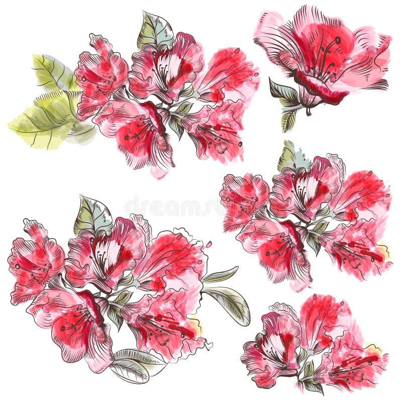 Raccolta dei fiori rosa dell'azalea in acquerello illustrazione vettoriale