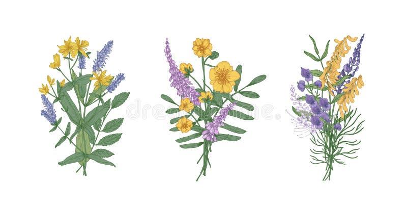 Raccolta dei mazzi di bei fiori selvaggi del prato e delle erbe di fioritura Insieme dei mazzi di wildflowers isolati sopra illustrazione vettoriale