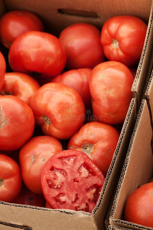 Raccolta dei pomodori al servizio dei coltivatori fotografia stock