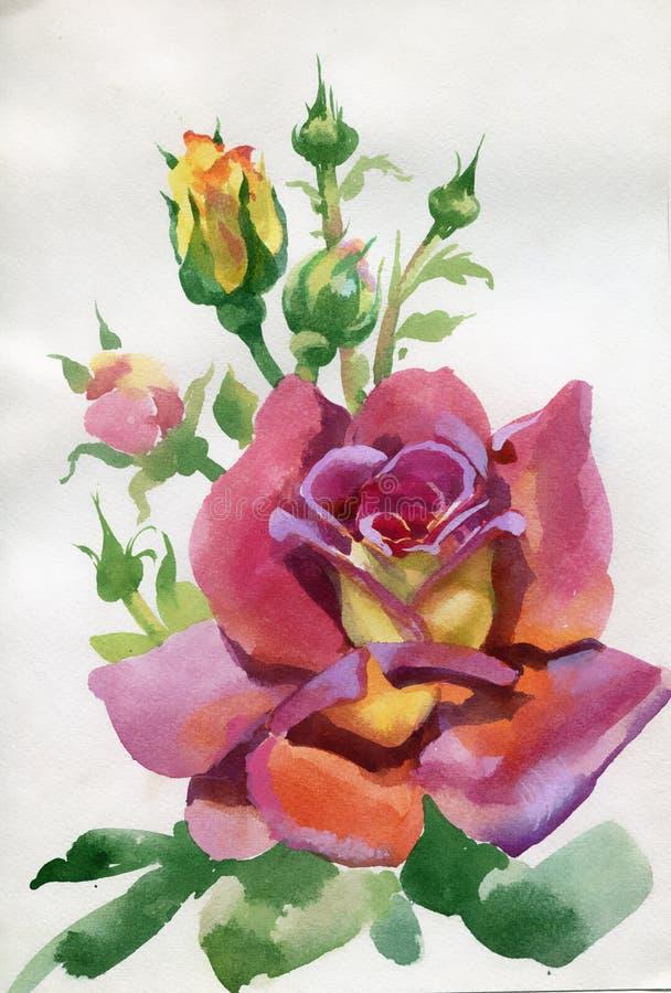 Raccolta del fiore dell'acquerello: Rosa illustrazione vettoriale