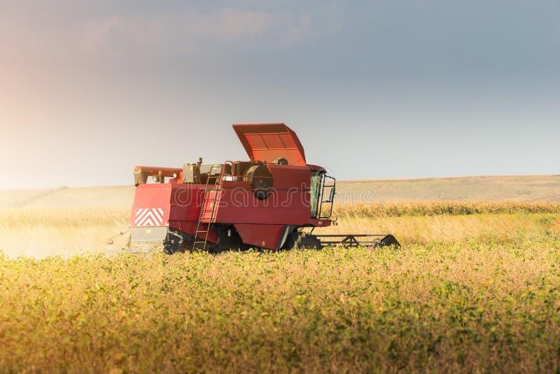 Raccolta del giacimento della soia con l'associazione immagine stock