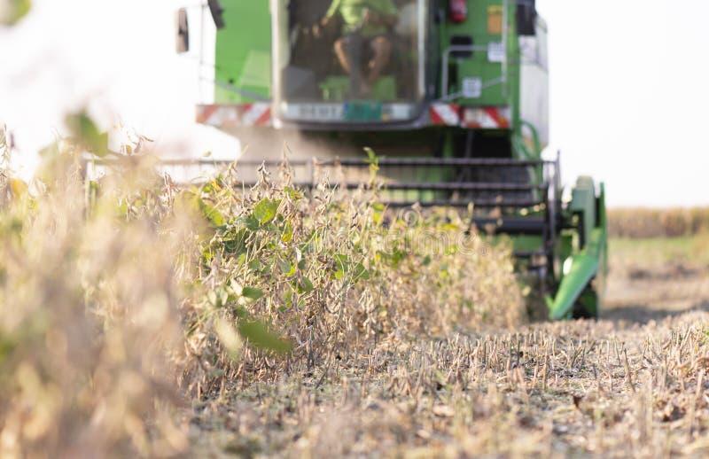Raccolta del giacimento della soia con l'associazione verde immagine stock libera da diritti