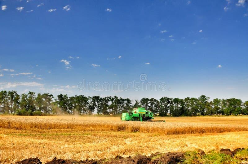 Download Raccolta del grano fotografia editoriale. Immagine di chopper - 56893237