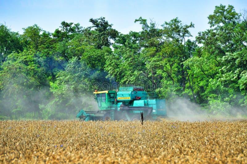 Download Raccolta del grano fotografia editoriale. Immagine di coltura - 56893351