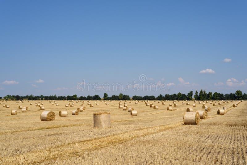 Raccolta del grano sul campo fotografie stock libere da diritti