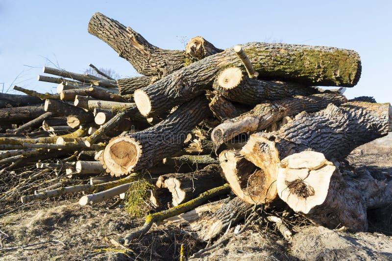 Raccolta del legno, tronchi degli alberi abbattuti immagini stock libere da diritti