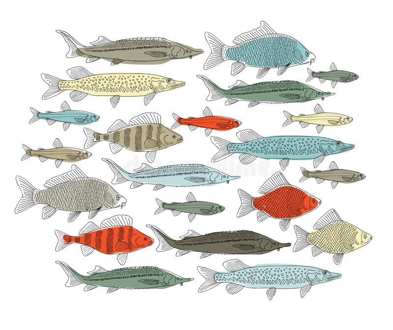 Raccolta del pesce, schizzo per la vostra progettazione illustrazione di stock