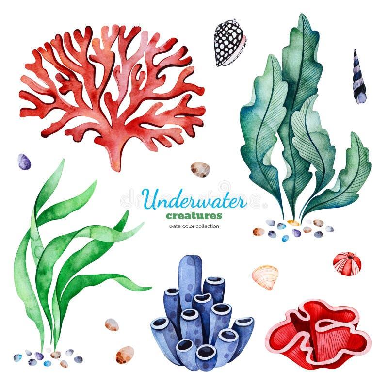 Raccolta dell'acquerello con le barriere coralline multicolori, le conchiglie e le alghe illustrazione vettoriale