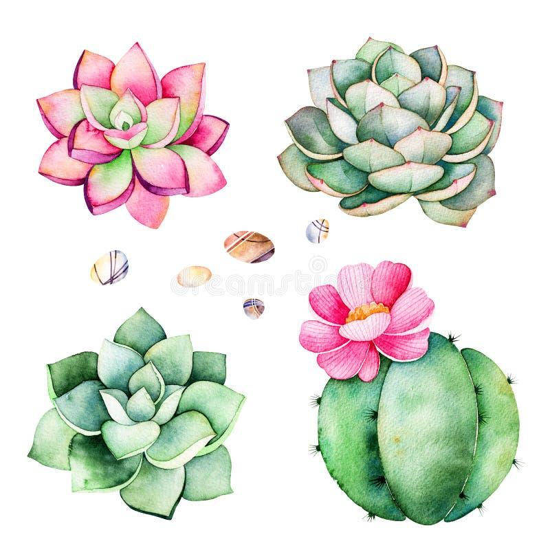Raccolta dell'acquerello con le piante dei succulenti, pietre del ciottolo, cactus illustrazione vettoriale