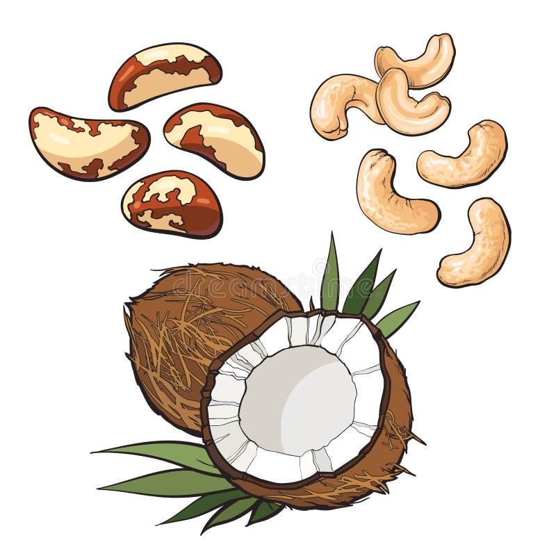 Raccolta dell'anacardio, della noce di cocco e delle noci del Brasile illustrazione di stock
