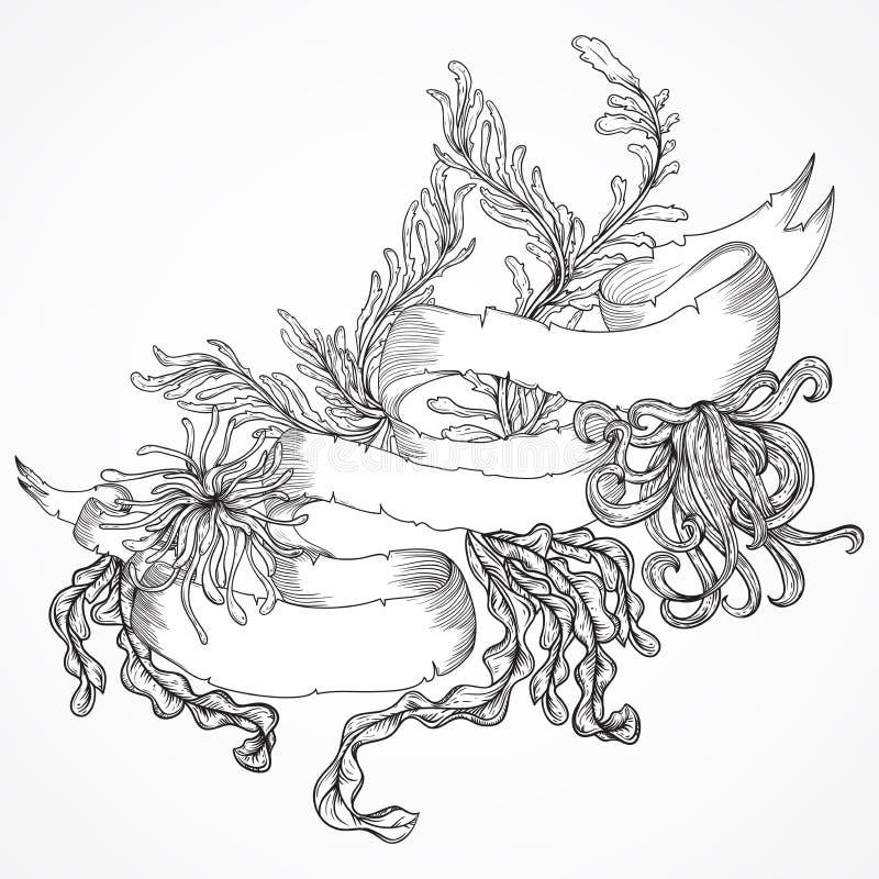Raccolta dell'insegna marina delle piante, dell'alga e del nastro Insieme dell'annata della flora marina disegnata a mano in bian illustrazione vettoriale