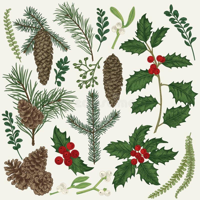 Raccolta della pianta di Natale illustrazione vettoriale