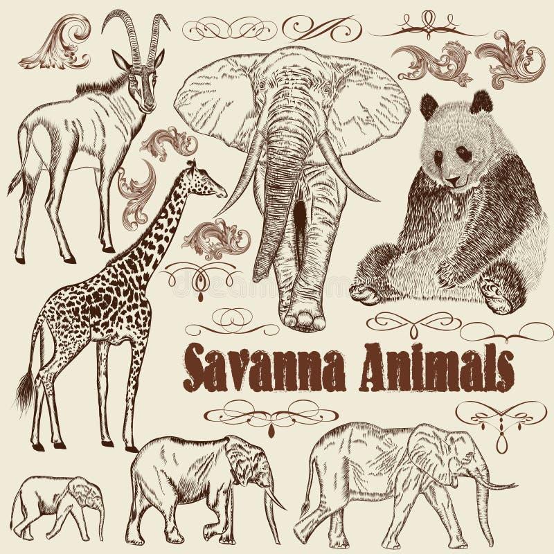 Raccolta della savanna dell'Africano degli animali di vettore royalty illustrazione gratis