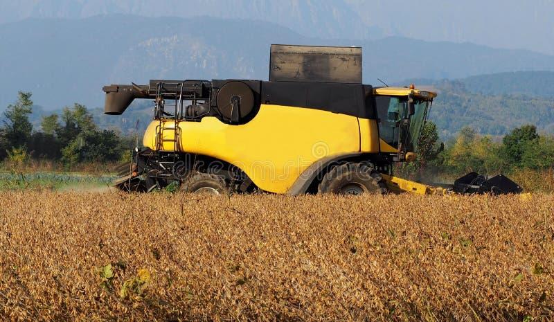 Raccolta della soia con una mietitrebbiatrice all'inizio dell'autunno immagini stock libere da diritti