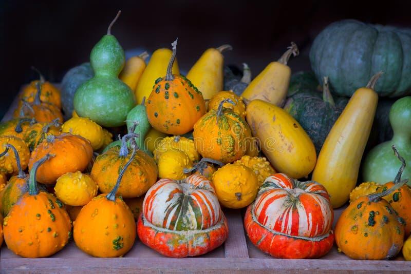 Raccolta della zucca di autunno come fondo di Halloween immagini stock libere da diritti