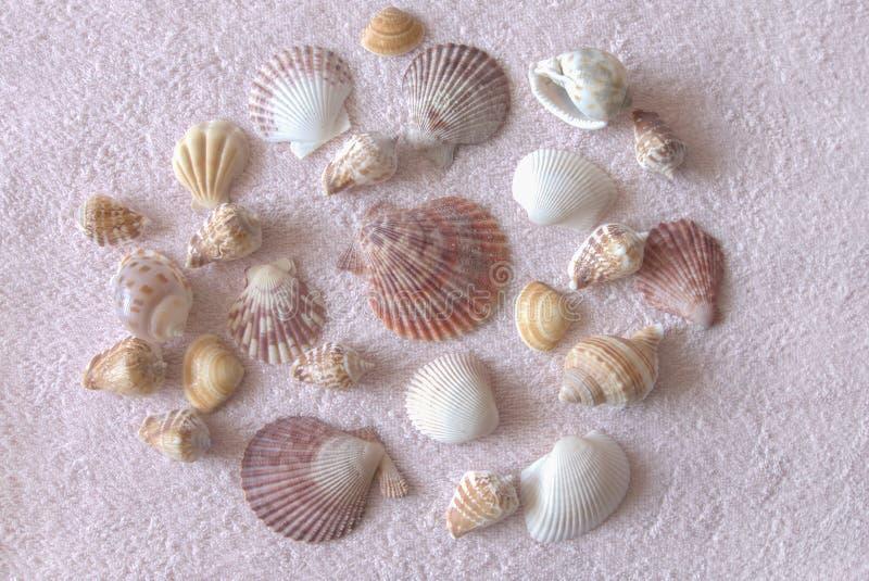 Raccolta delle conchiglie su un asciugamano di spiaggia immagine stock
