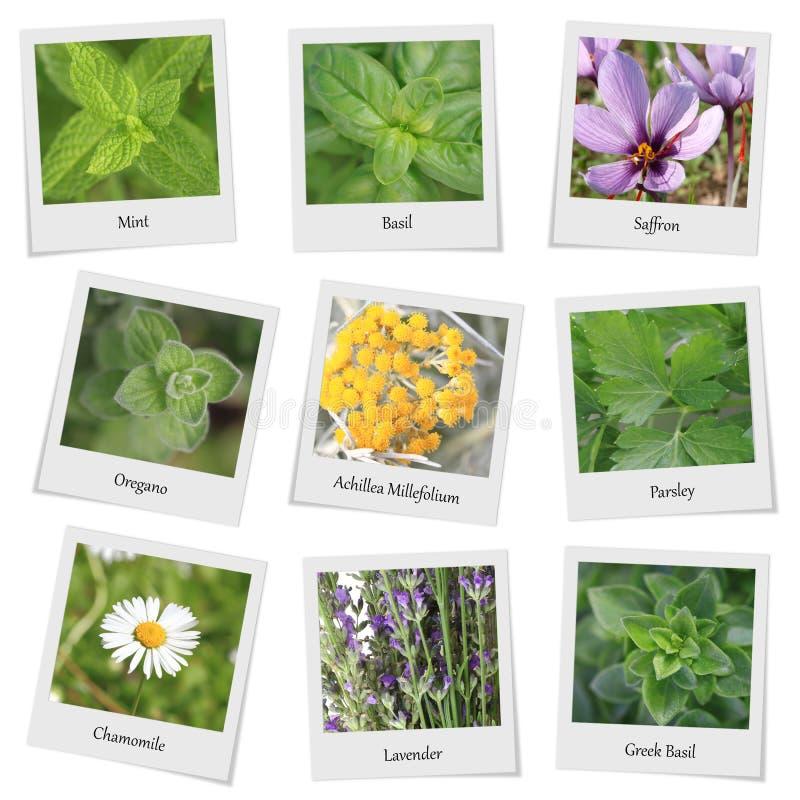 Raccolta delle erbe e delle spezie immagini stock libere da diritti
