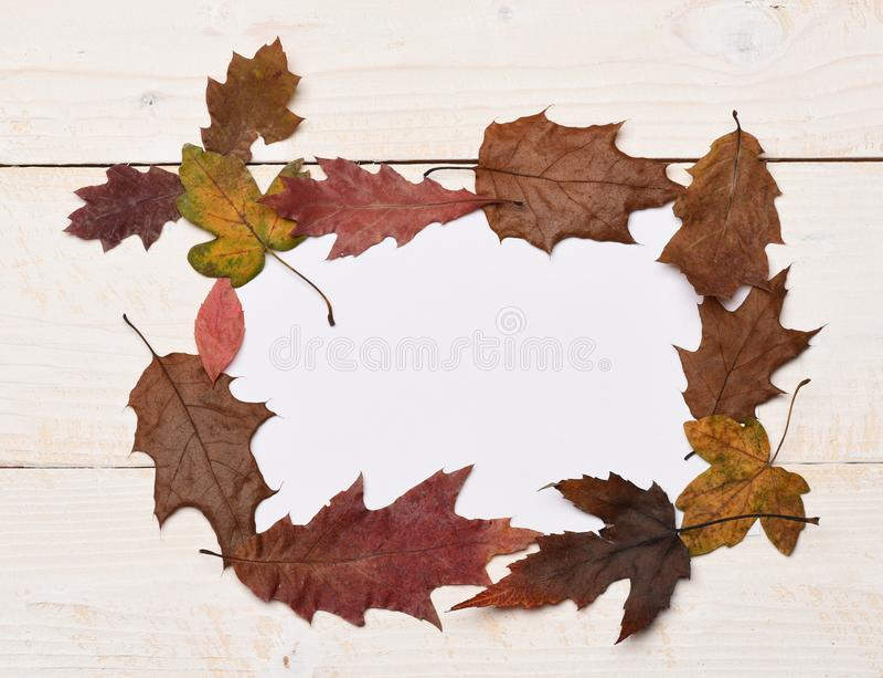 Raccolta delle foglie di autunno su fondo di legno bianco immagine stock