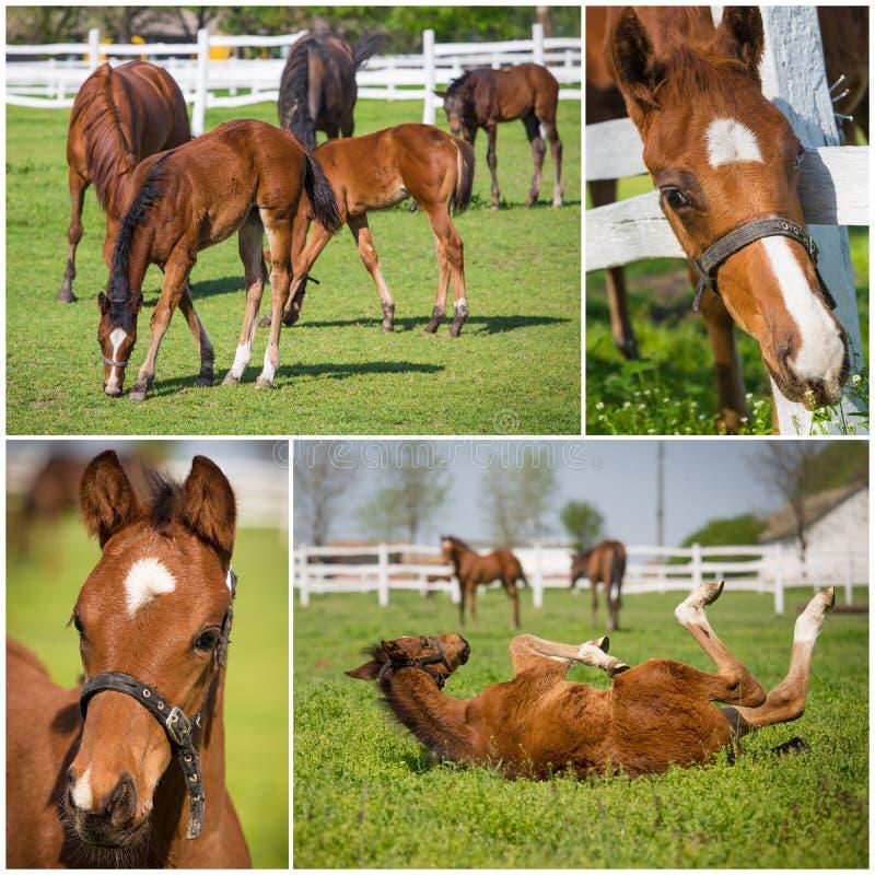 Raccolta delle immagini dei cavalli fotografia stock libera da diritti