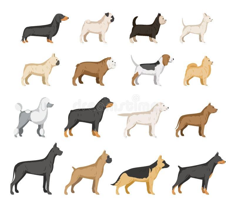 Raccolta delle razze del cane di vettore isolata su bianco illustrazione di stock