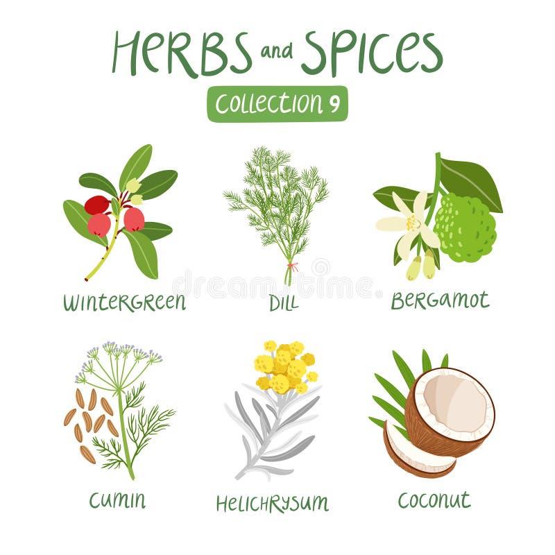 Raccolta 9 delle spezie e delle erbe illustrazione di stock