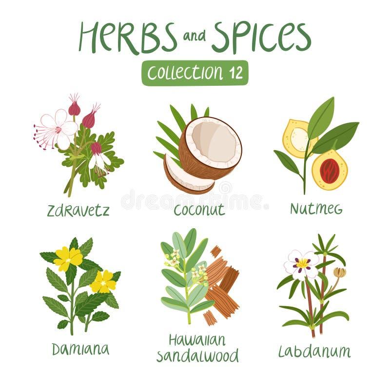 Raccolta 12 delle spezie e delle erbe illustrazione di stock