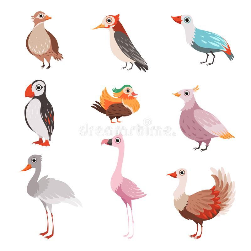 Raccolta di bei uccelli, fenicottero, puffino, waxwing, cardinale, luminoso, illustrazione di vettore della gru illustrazione di stock