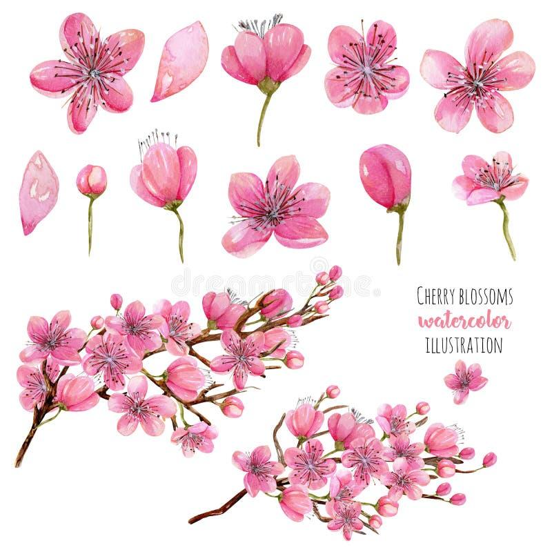 Raccolta di fioritura dei fiori, dei germogli e dei rami del ciliegio della molla dell'acquerello royalty illustrazione gratis