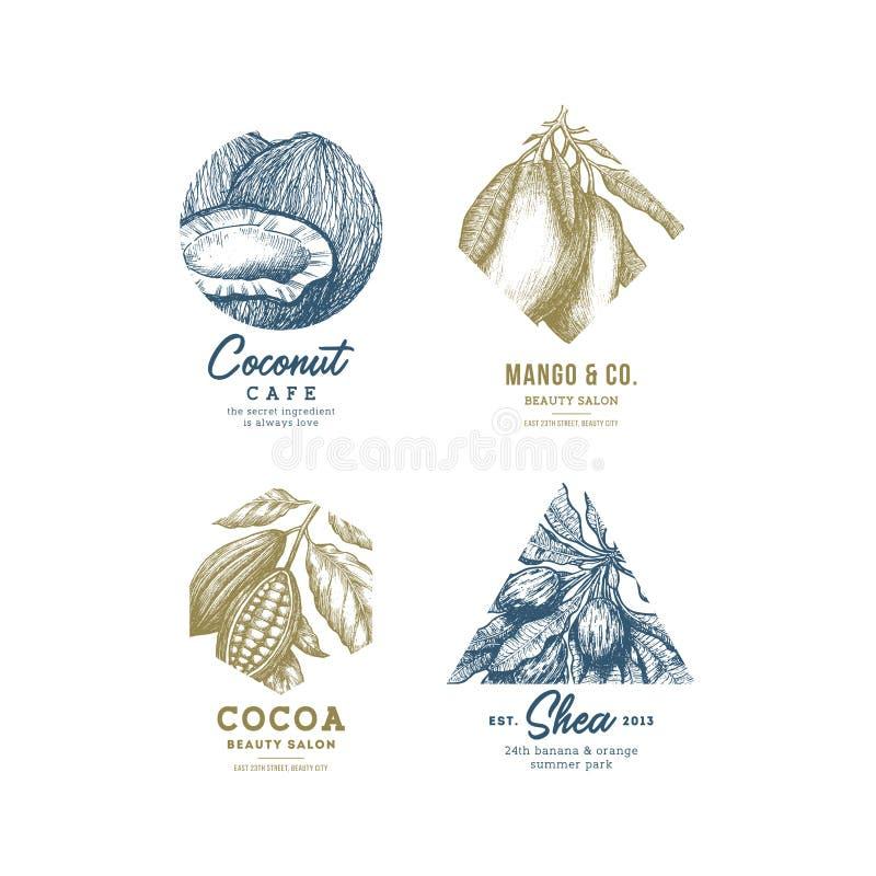 Raccolta di logo della frutta tropicale Insieme inciso del logotype Noce di cocco, mango, cacao, karitè Illustrazione di vettore illustrazione vettoriale