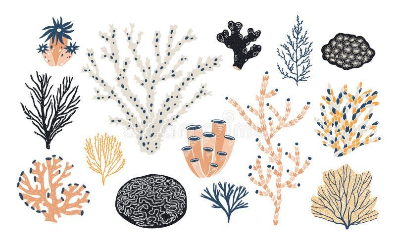 Raccolta di vari coralli ed alga o alghe isolati su fondo bianco Belle specie subacquee, mare profondo illustrazione di stock