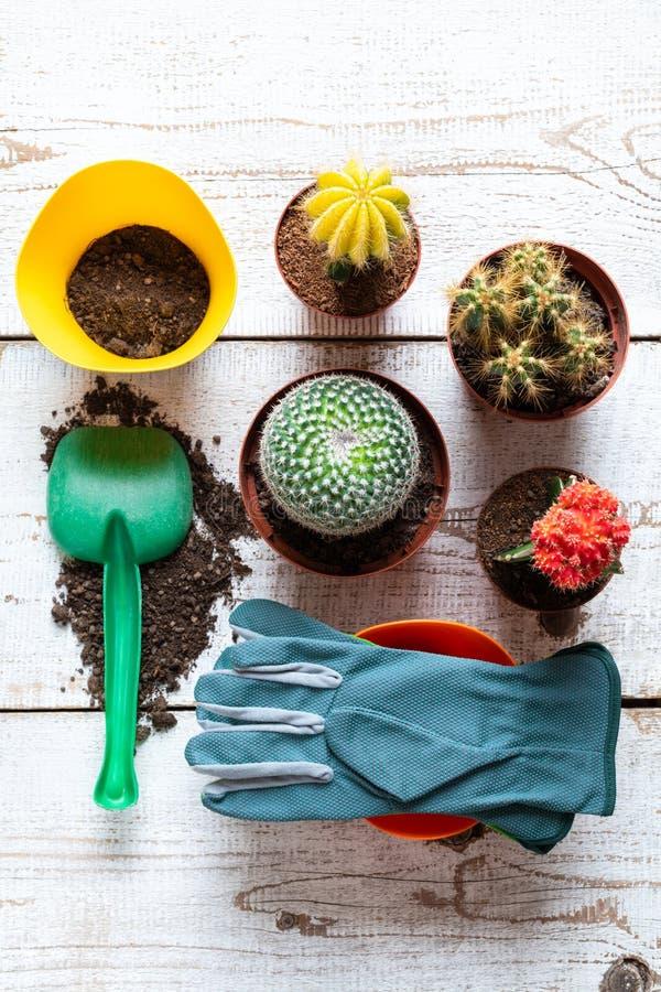 Raccolta di varie piante di fioritura del cactus, dei guanti di giardinaggio, del suolo di impregnazione e della cazzuola su fond immagini stock