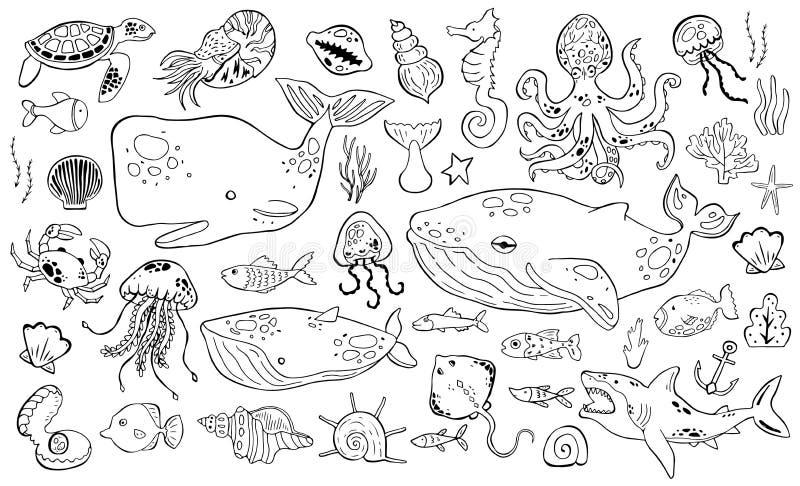 Raccolta di vita marina dell'insieme dello sketche Animali di mare illustrazione vettoriale