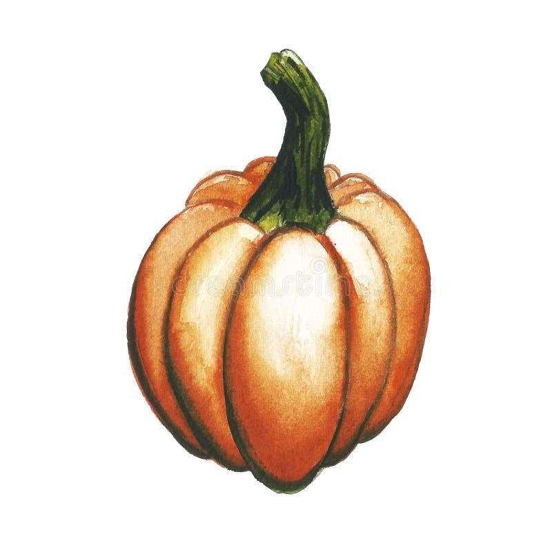 Raccolta dipinta acquerello delle verdure di autunno Elementi disegnati a mano di progettazione dell'alimento fresco isolati su f illustrazione vettoriale