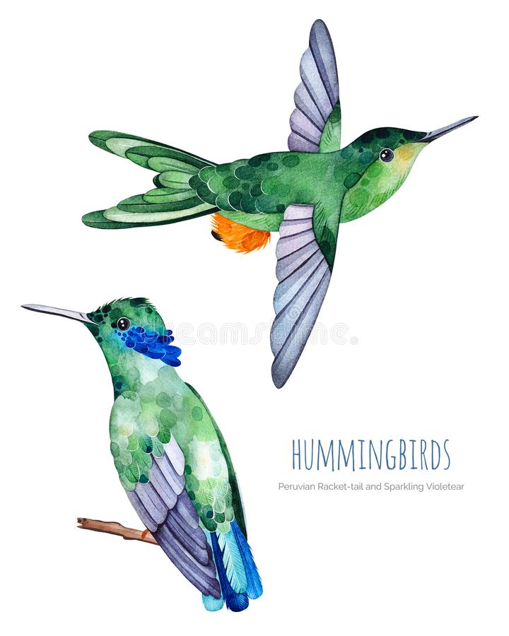 Raccolta esotica degli uccelli dell'acquerello illustrazione vettoriale