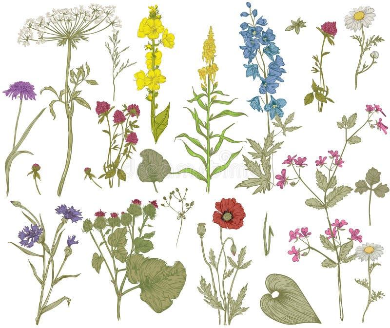 Raccolta floreale selvaggia di vettore royalty illustrazione gratis