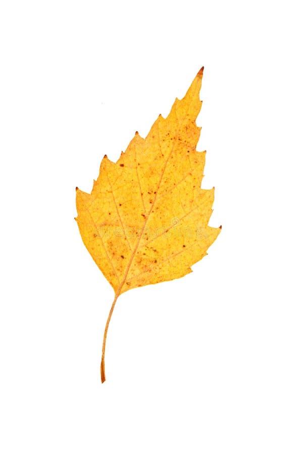 Raccolta fresca delle mele Giorno felice di ringraziamento Festival del raccolto Priorità bassa di autunno fotografie stock