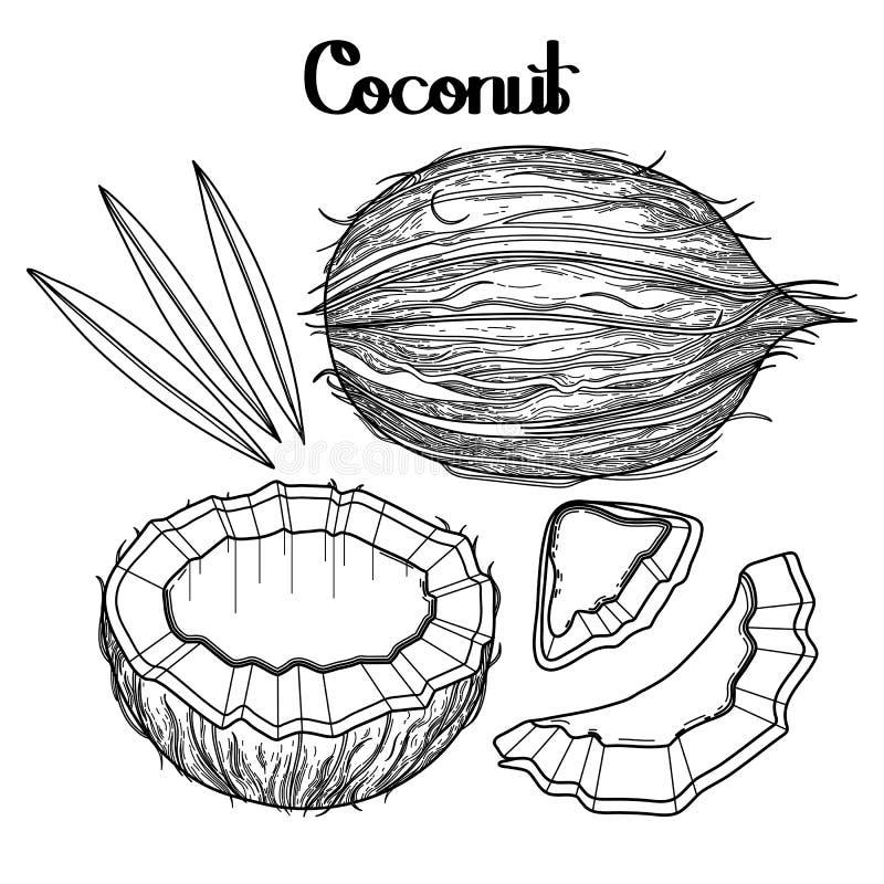 Raccolta grafica della noce di cocco illustrazione di stock