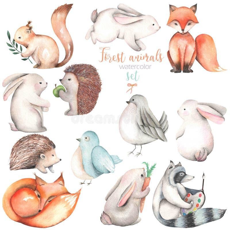 Raccolta, insieme delle illustrazioni sveglie degli animali della foresta dell'acquerello illustrazione vettoriale