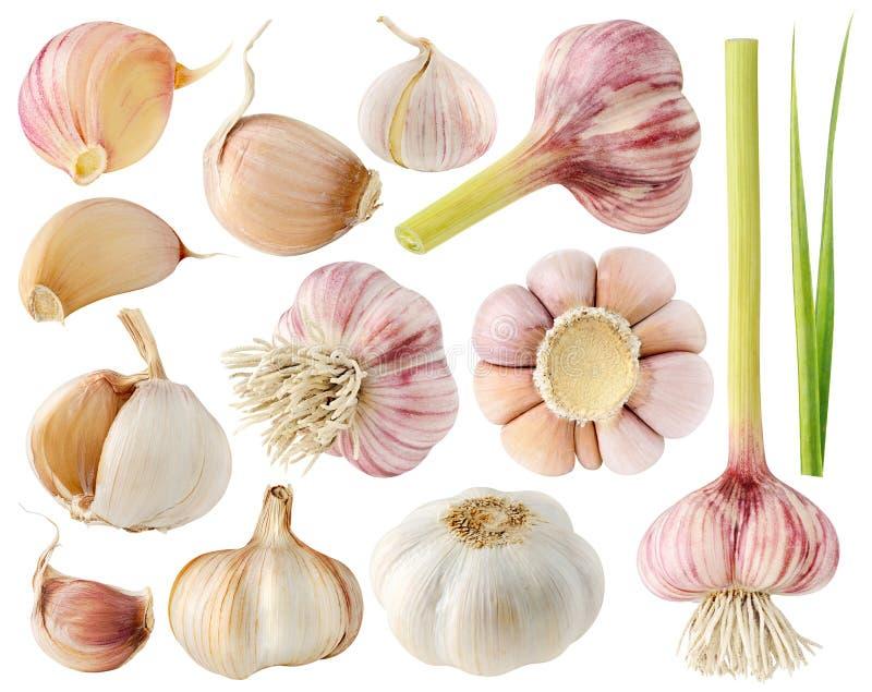 Raccolta isolata dell'aglio fotografia stock