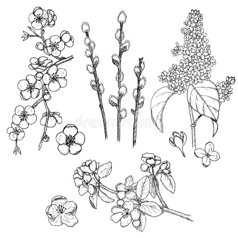 Raccolta naturale della primavera disegnata a mano illustrazione di stock