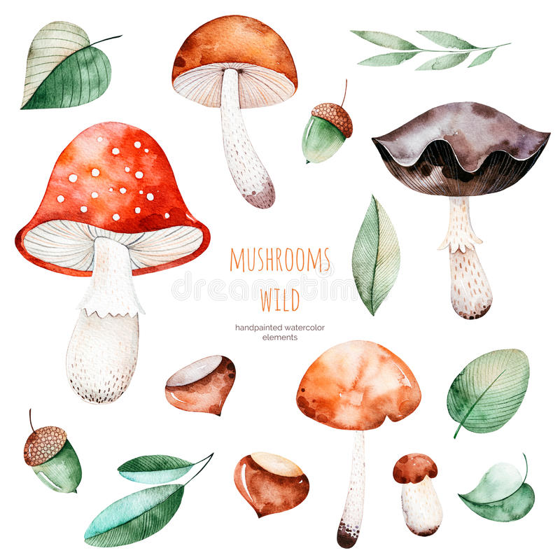 Raccolta olorful di autunno del  di Ñ con 15 elementi dell'acquerello illustrazione di stock