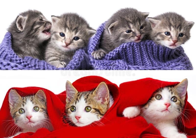 Raccolta sveglia dei gattini immagini stock